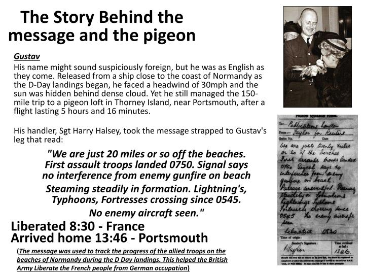 The Story Behind the message and the pigeon