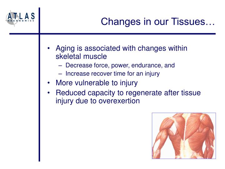 Changes in our Tissues…