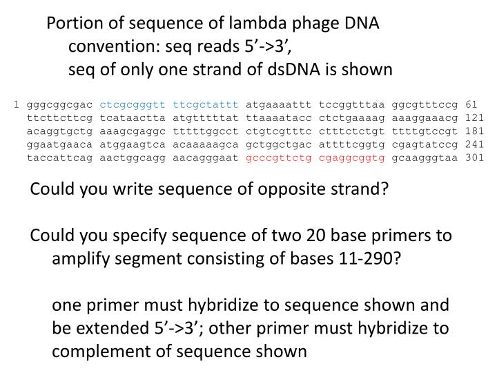 Portion of sequence of lambda phage DNA