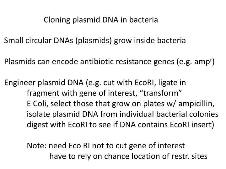 Cloning plasmid DNA in bacteria