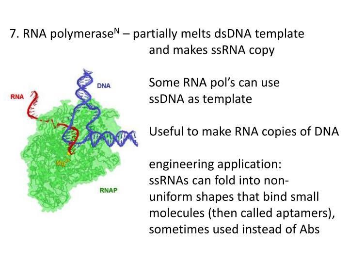 7. RNA
