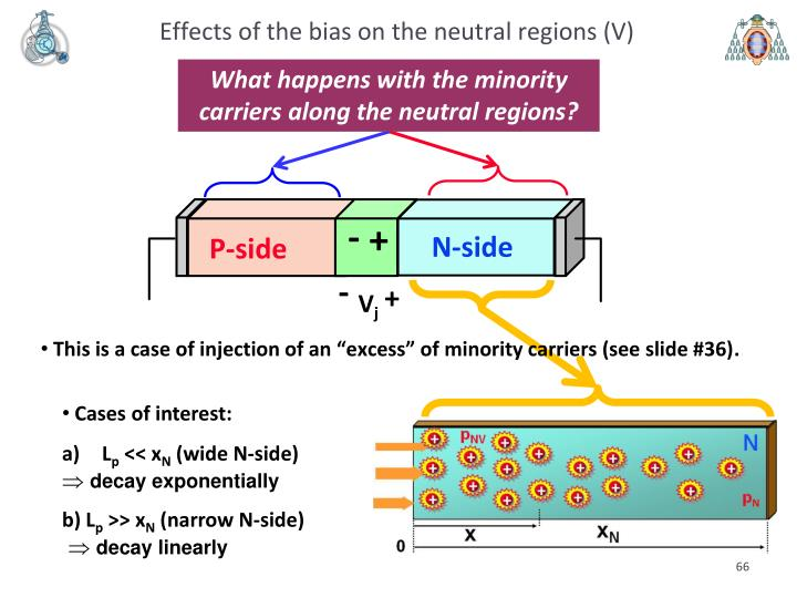Effects of the bias on the neutral regions (V)