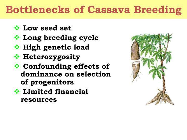 Low seed set