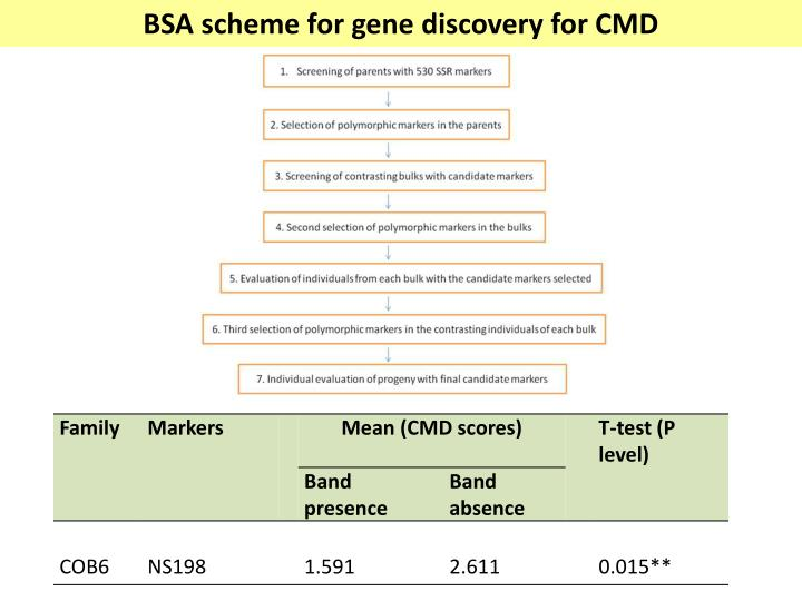 BSA scheme for gene discovery for CMD