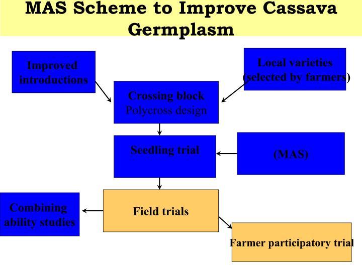 MAS Scheme to Improve