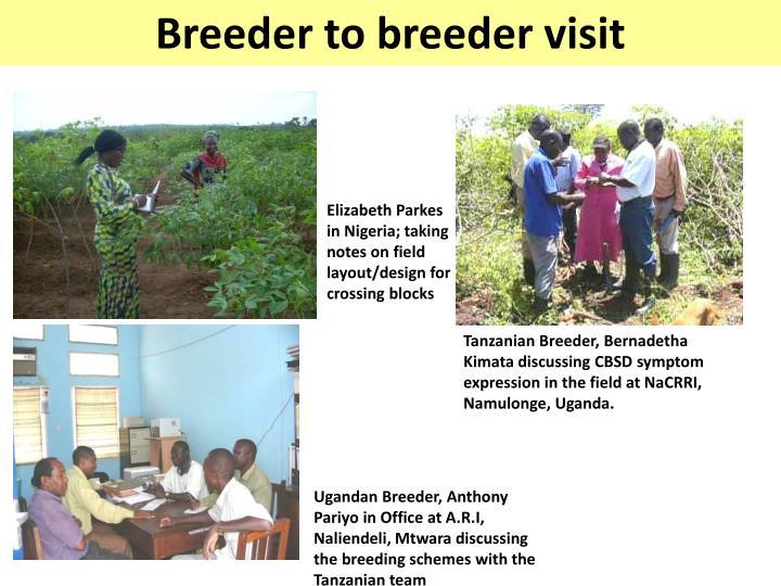 Ugandan Breeder, Anthony