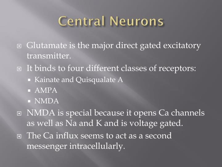 Central Neurons