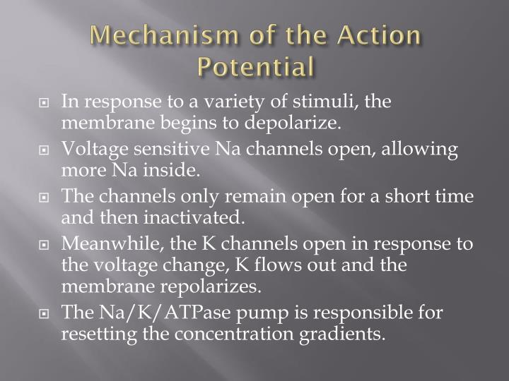 Mechanism of the Action Potential