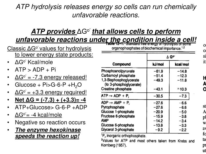 ATP hydrolysis releases energy so cells can run chemically unfavorable reactions.