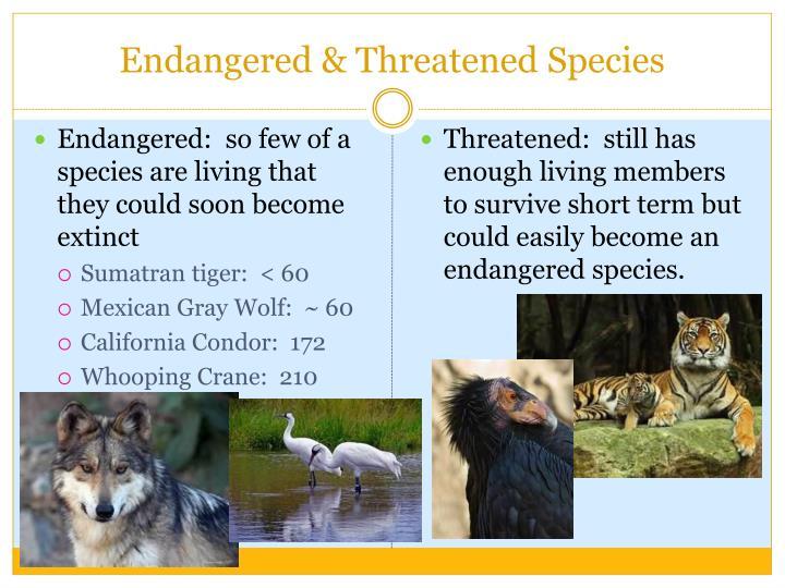 Endangered & Threatened Species