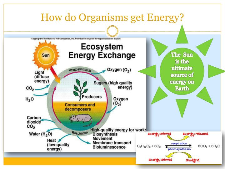 How do Organisms get Energy?