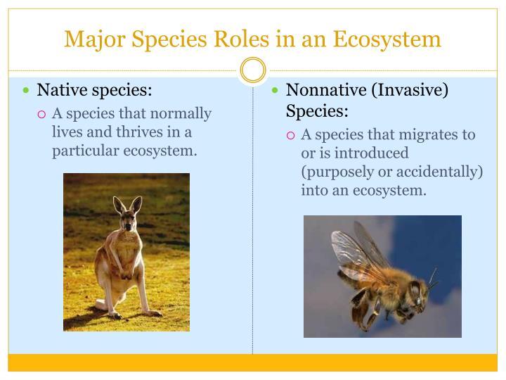 Major Species Roles in an Ecosystem