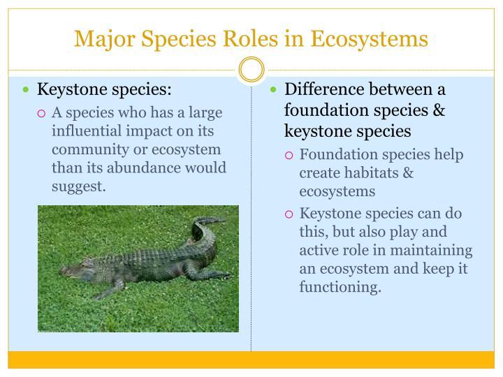 Major Species Roles in Ecosystems