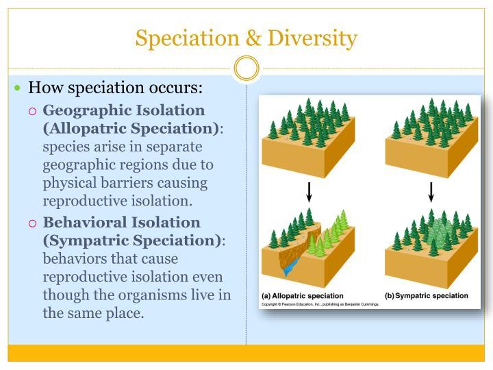 Speciation & Diversity