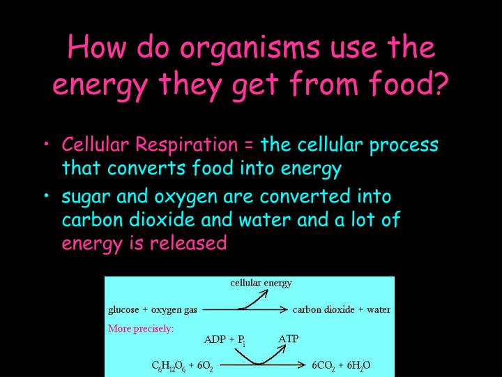 How do organisms use the energy they get from food?