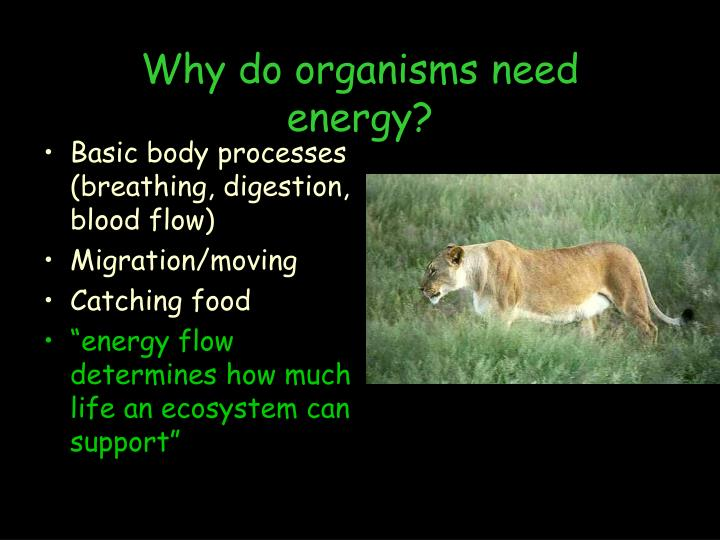 Why do organisms need energy?