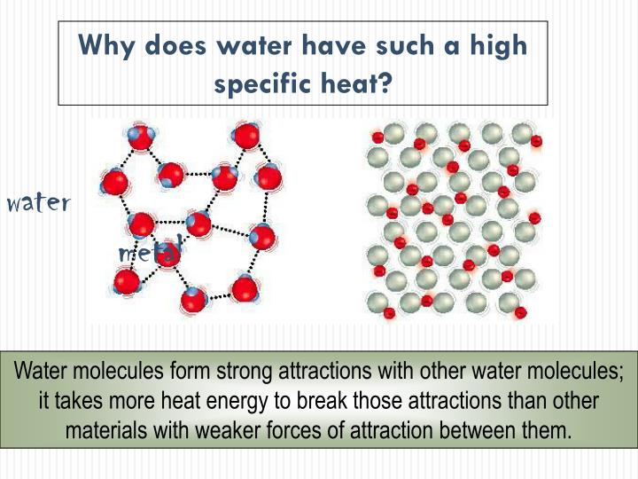 Why does water have such a high specific heat?