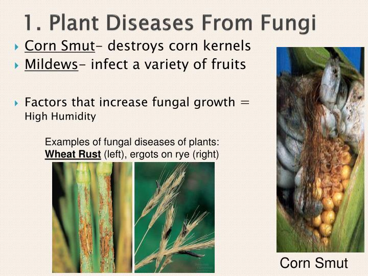1. Plant Diseases From Fungi