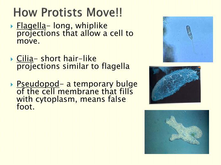 How Protists