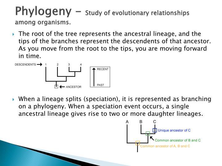 Phylogeny -