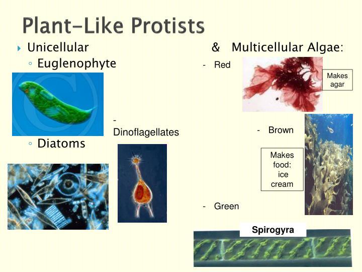 Plant-Like