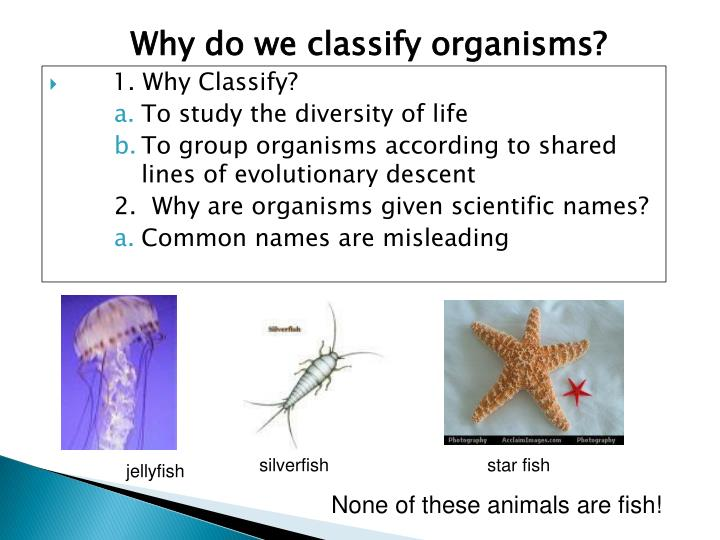 Why do we classify organisms?
