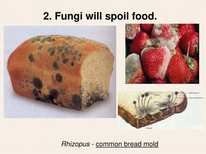 2. Fungi will spoil food.