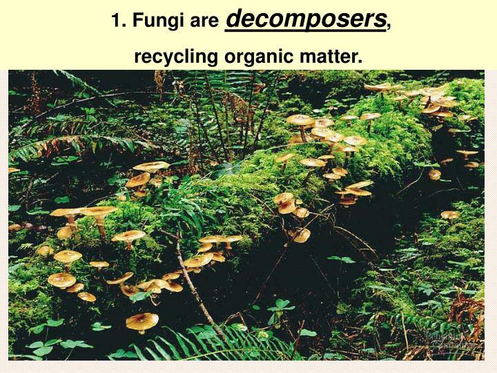 1. Fungi are