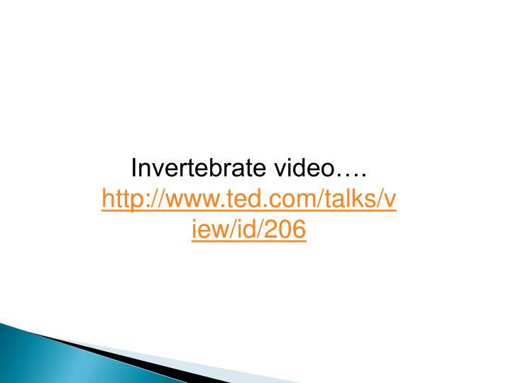 Invertebrate video….