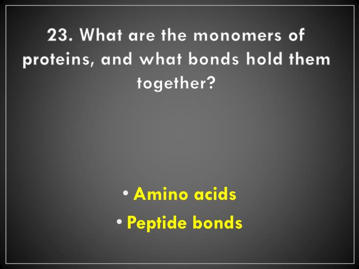 23. What are the monomers of proteins, and what bonds hold them together?