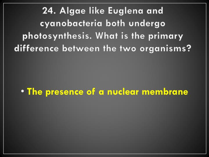 24. Algae like Euglena and