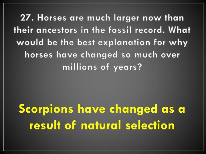 27. Horses