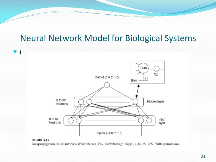 Neural Network Model for Biological Systems