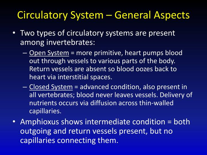 Circulatory System – General Aspects