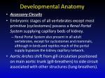 developmental anatomy3