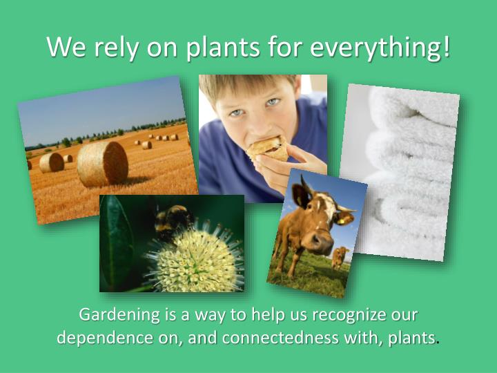 We rely on plants for everything!