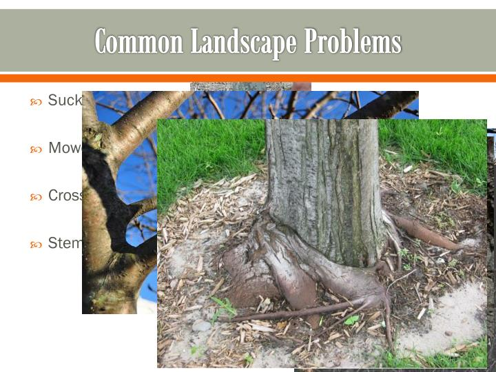 Common Landscape Problems