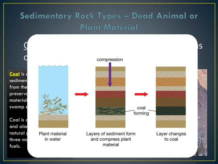 Sedimentary Rock Types – Dead Animal or Plant Material