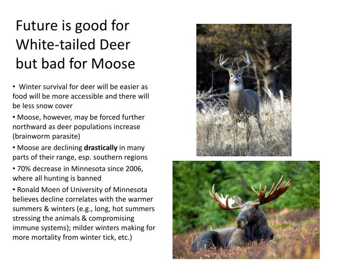 Future is good for White-tailed Deer but bad for Moose
