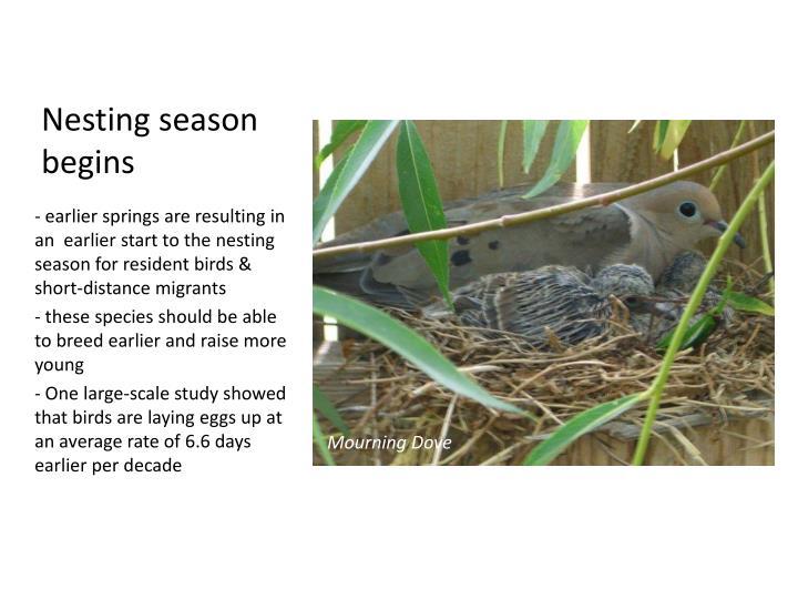 Nesting season begins