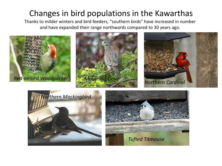 Changes in bird populations in the Kawarthas