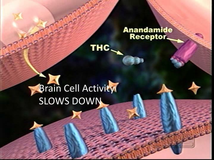 Brain Cell Activity