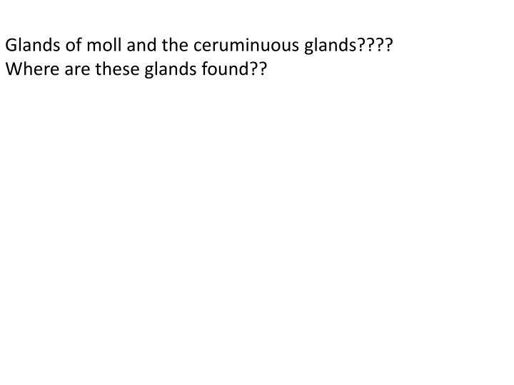 Glands of moll and the ceruminuous glands????