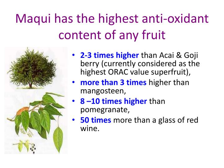 Maqui has the highest anti-oxidant content of any fruit