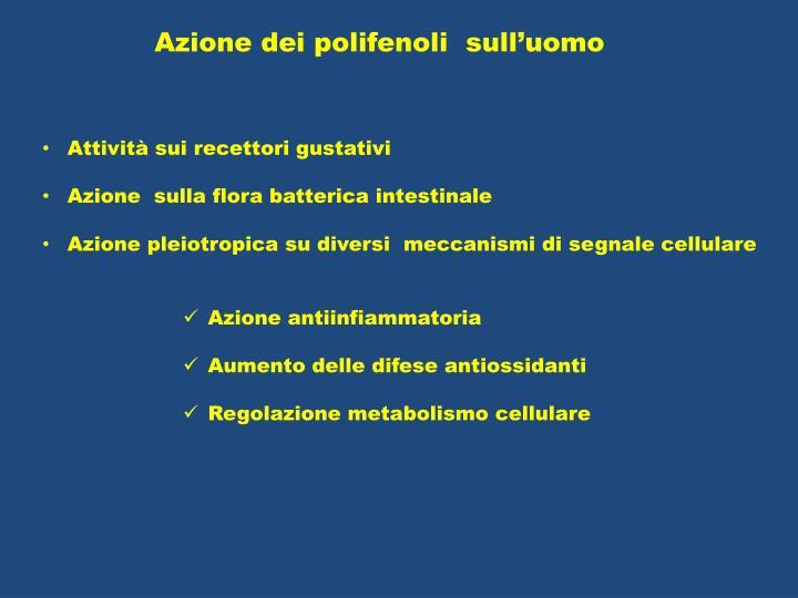 Azione dei polifenoli  sull'uomo