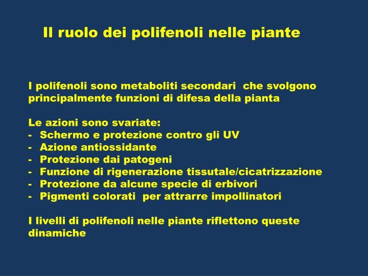 Il ruolo dei polifenoli nelle piante