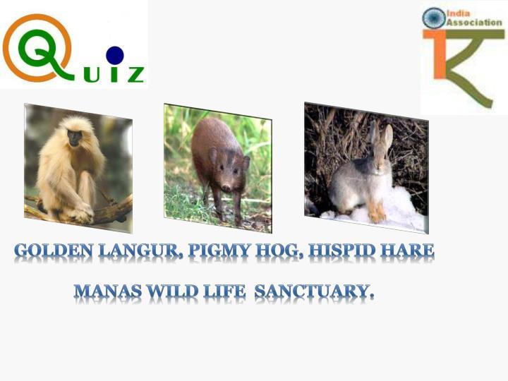Golden Langur, Pigmy Hog, Hispid Hare