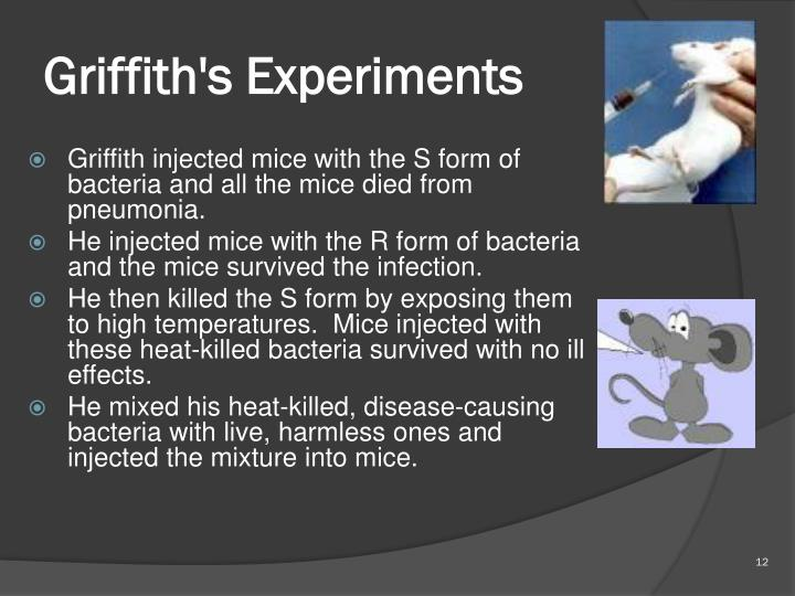 Griffith's Experiments
