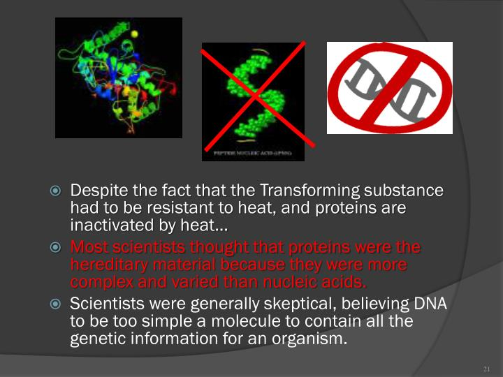 Despite the fact that the Transforming substance had to be resistant to heat, and proteins are inactivated by heat…