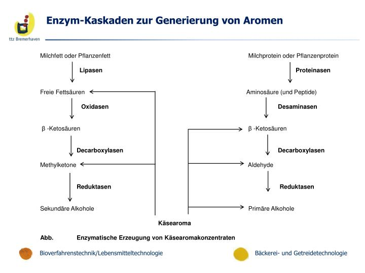 Enzym-Kaskaden zur Generierung von Aromen